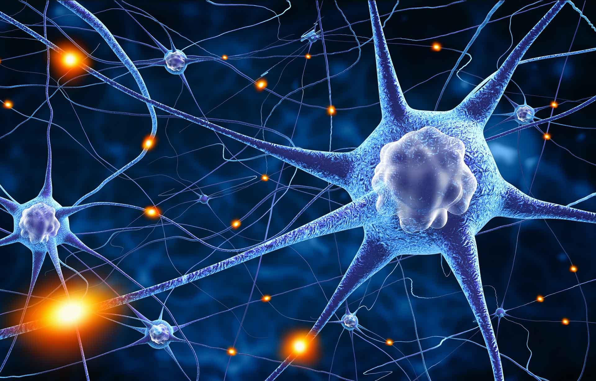 Erkenntnisse aus der Hirnforschung
